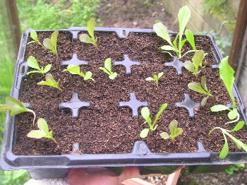 Seedlings1_4