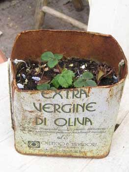 Olive_tin