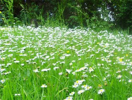 Meadow5