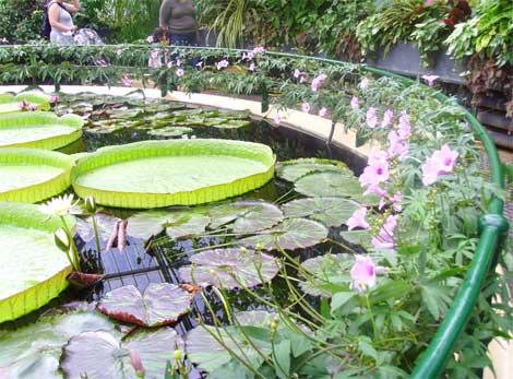 Kew15