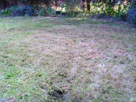 Mowed_meadow