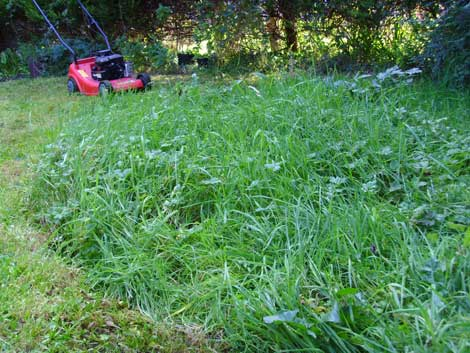 Mowing_meadow